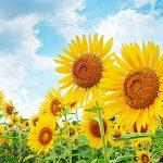 韓国語情報.com 2016年夏季休業(お盆休み)のお知らせ